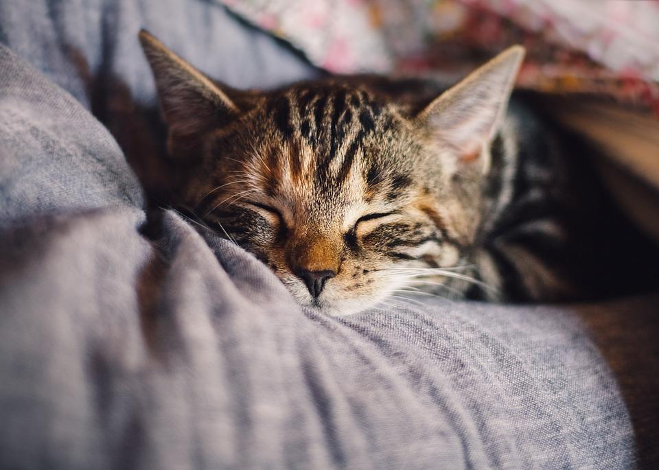 Katzen Traumfaenger