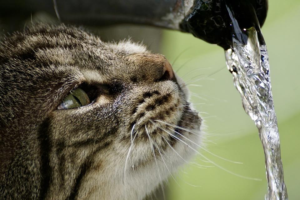 Katzentrinkbrunnen selber bauen