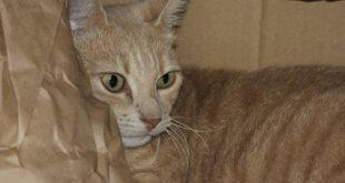 Spieltunnel Katzen Papier