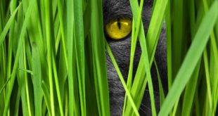 Katze gps Revier