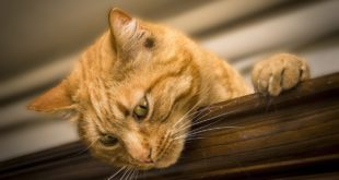 Katzenparadies bauen