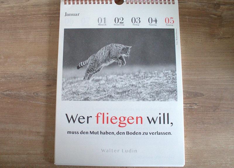 Literarischer Katzenkalender