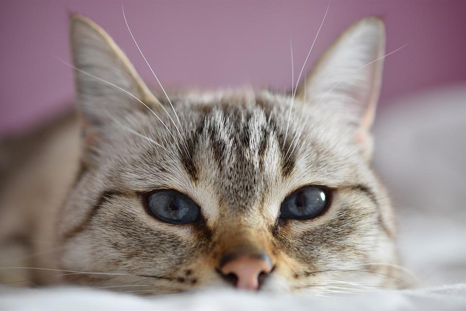 Schutzengeldorf behinderte Katzen