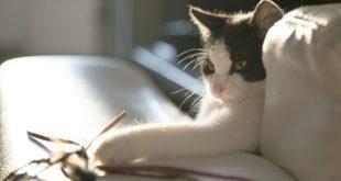 gefaehrliches Katzenzubehoer