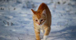 Katze aus Kuschelsocke Sockenkatze