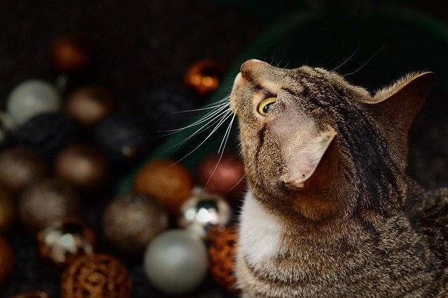 Persoenliche Weihnachtsgeschenke Katzenhalter Fotos