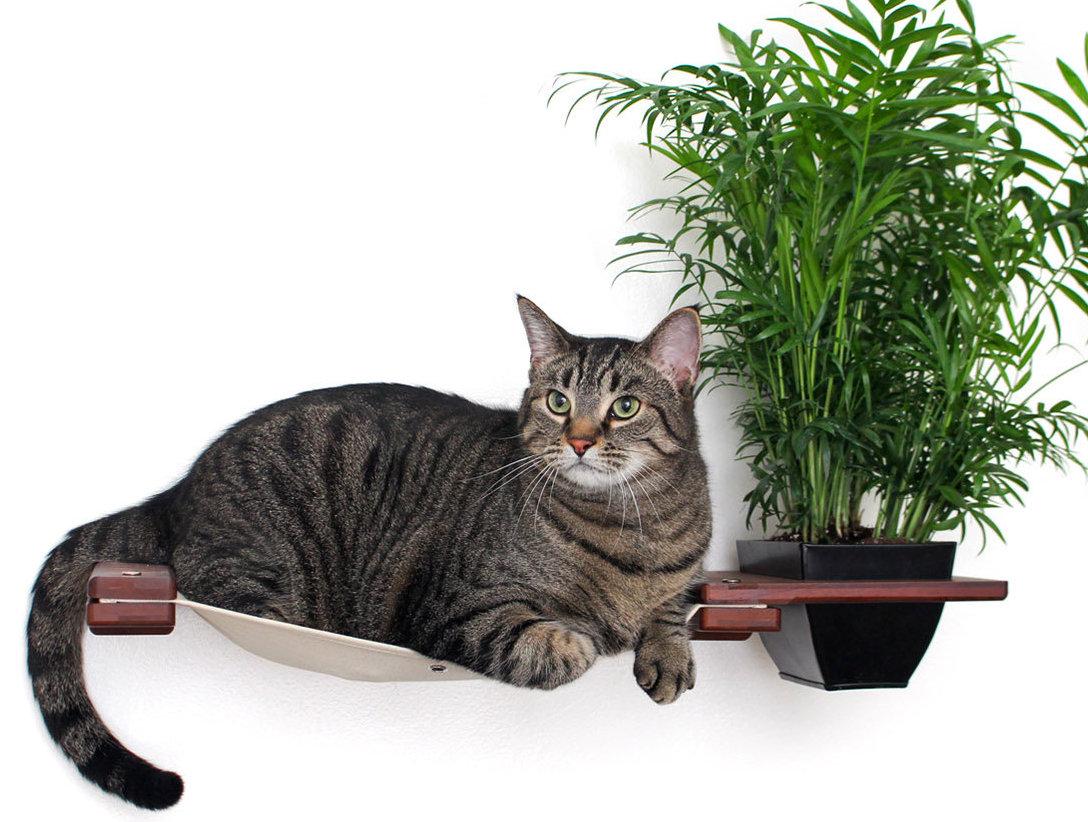 Haengematte Katze Wand