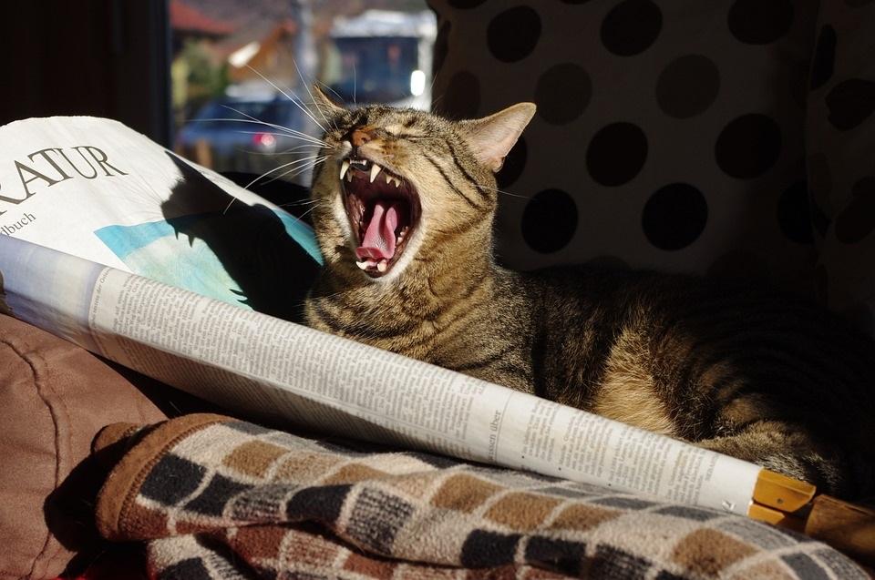 Katzen aus Zeitungspapier basteln