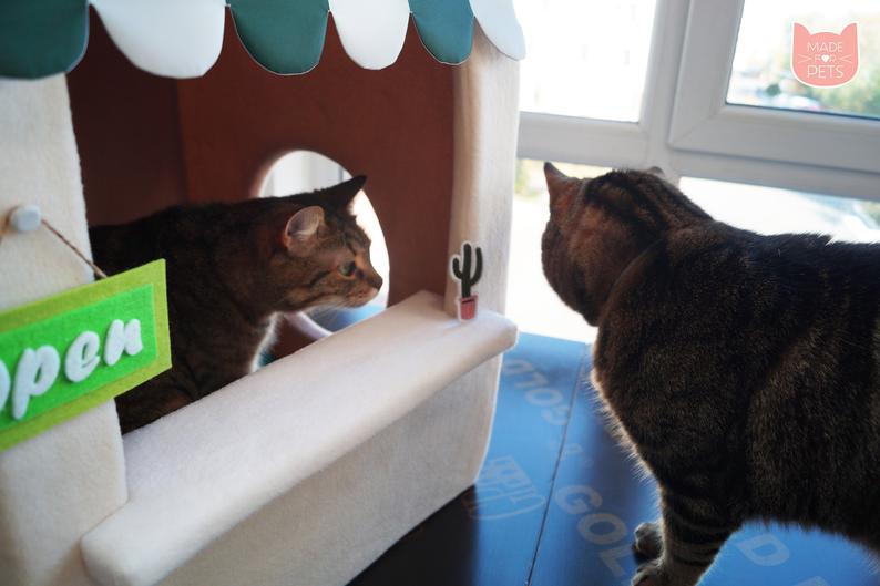 Katzen bei Starbucks