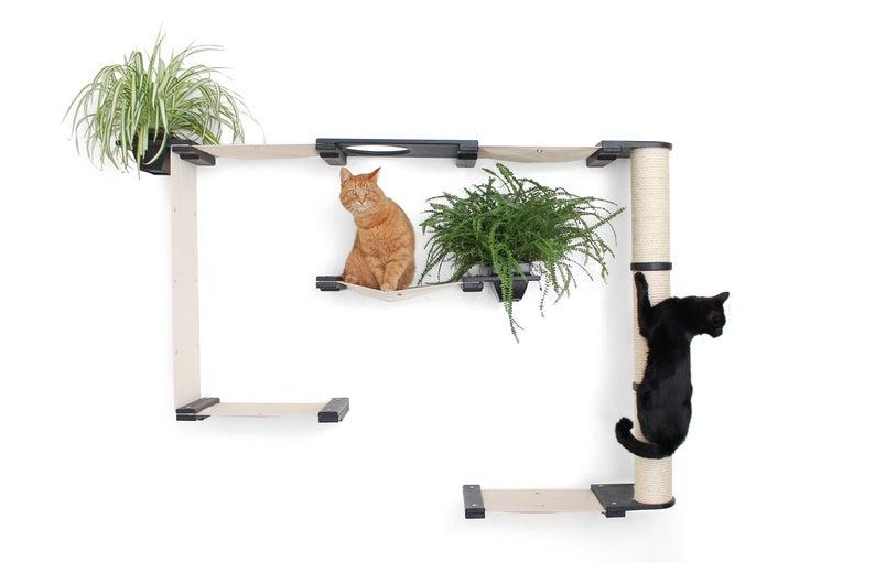 Katzenmoebel mit Katzengras