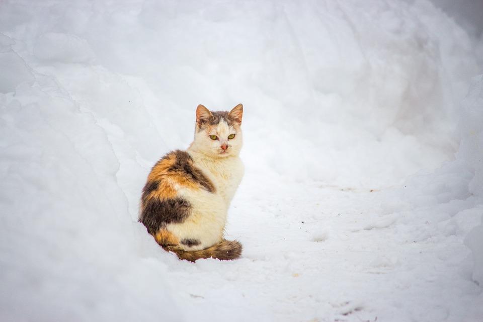 Schutzhuette Streunerkatzen