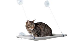 Katzen Fensterliege Saugnaepfe