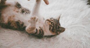 Schnueffelteppich fuer Katzen selber machen