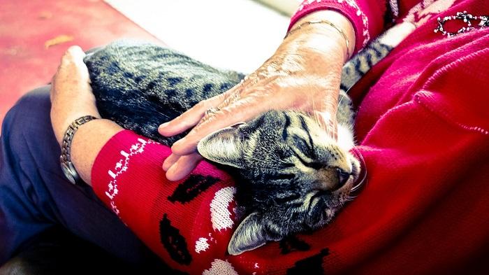 Coronakrise Katze