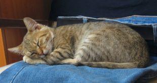 Haengeutensilo Katze selber machen DIY