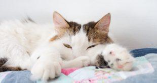 Katzenbett selber naehen mit Rand und Zugband