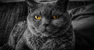 Nierenzysten bei Katzen