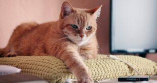 Katzenkissen aus Pullover DIY