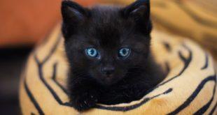 junge Katze wird nicht stubenrein