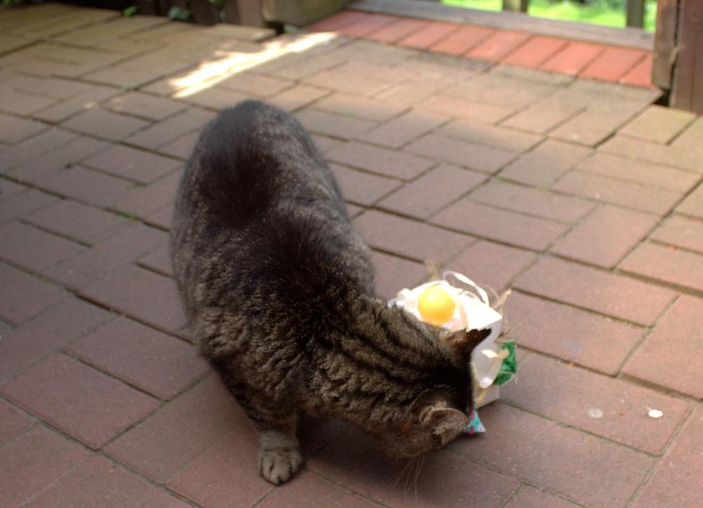 Beschaeftigung Katzen