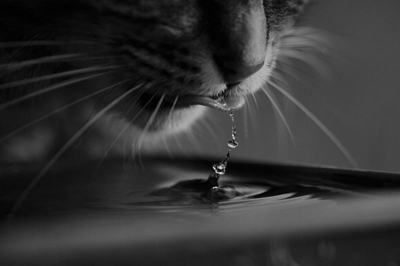 Katze zum Trinken animieren Tipps