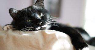 DIY kuscheliges Katzenbett aus Karton