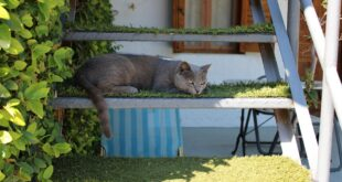 Katzenleitern Katzentreppen