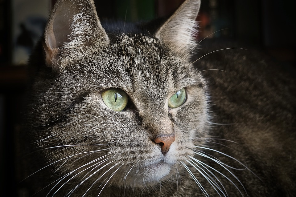 Vermisste Katze kehrt zurueck