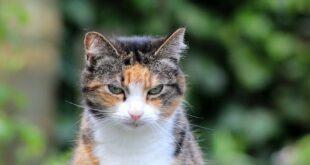 Darmtraegheit Katze