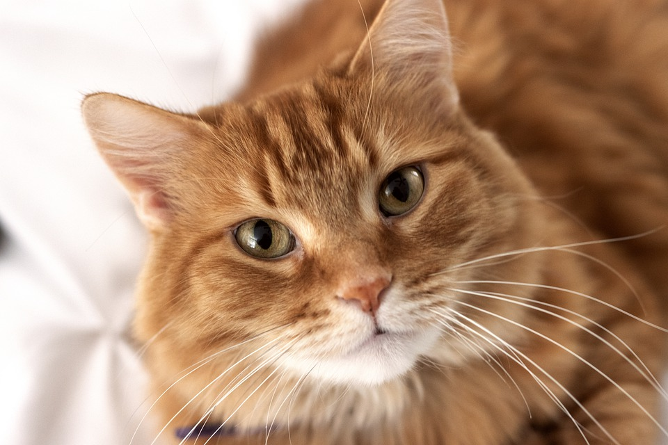 Aufbewahrung Utensilo Katze