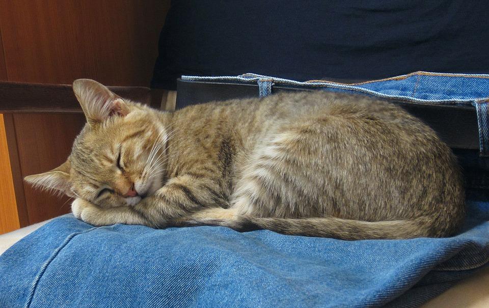 Katzenbett aus Jeans