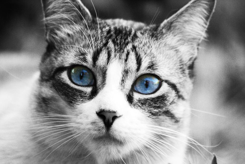 Blutdruckmessen bei Katzen