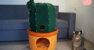 Katzenhoehle Kaktus