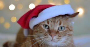 Adventskalender fuer Katzen