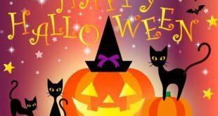 DIY Halloween Katzenhoehle