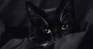 Junge Katze wird nicht zahm